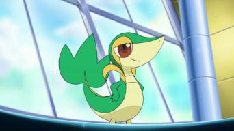 Pokemon - Pagina 2 Snivy_12