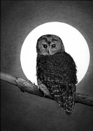 Omen of the OWL Owl-in10