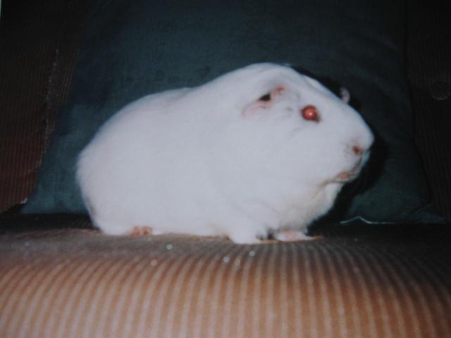 Mon cochon Grattouille Gratou10