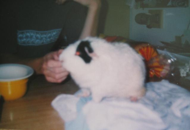 Mon cochon Grattouille Img_1214