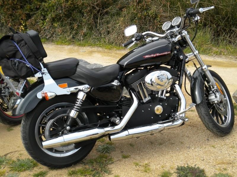 combien sommes nous en 1200 Sportster sur Passion-Harley Ma_bre10