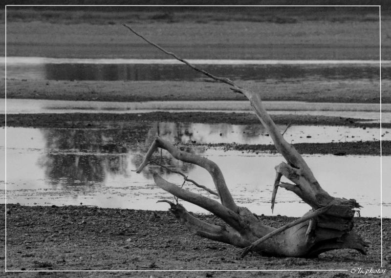 bord de Loire _dsc0110