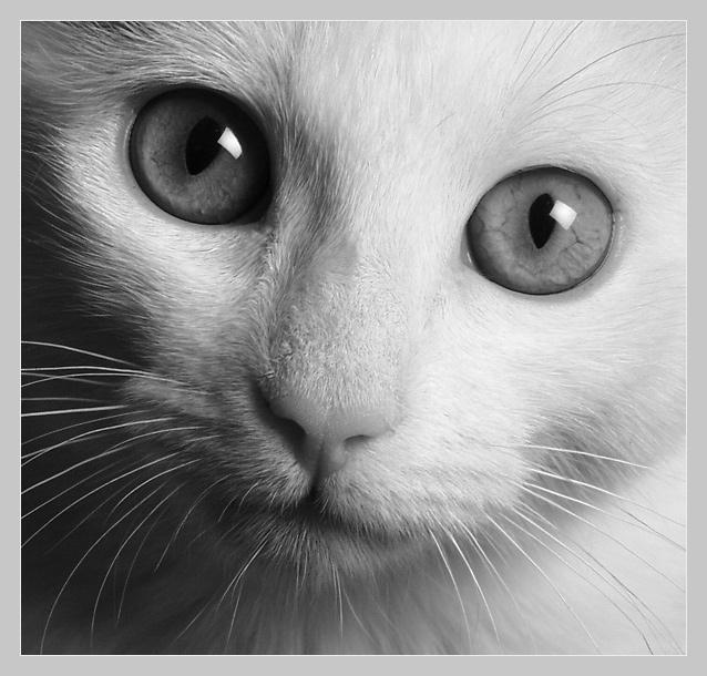 Des millions de photos pour trouver votre bonheur !  Cat10