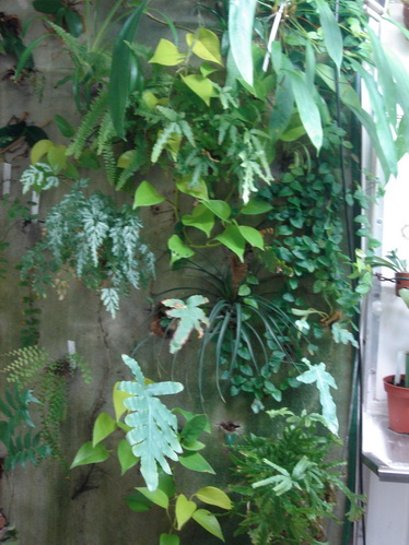 Création d'un mur végétal 2010