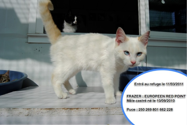 FRAZER - EUROPEEN RED POINT - 6 mois _fraze10