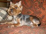 Повседневные стрижки собак. P4120010