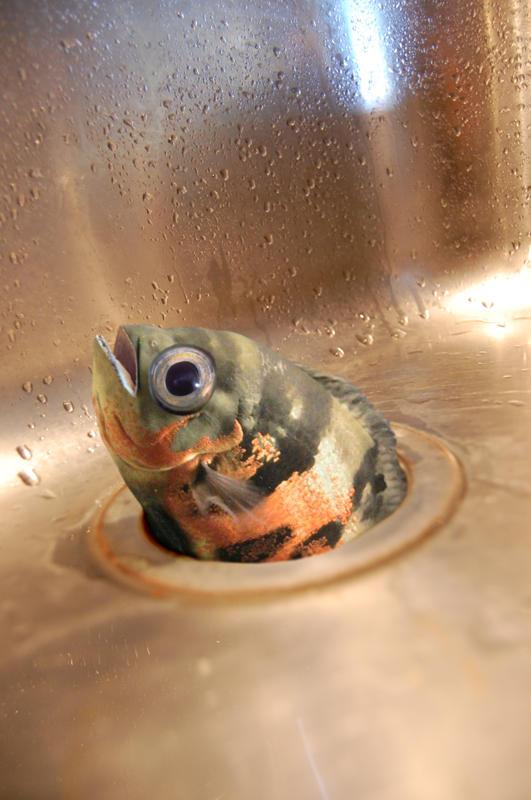 Fish! Oscar_10
