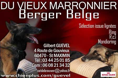 RCI DOGSPORT - Portail Marron11