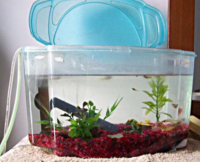 Mon aquarium =3 Photo516