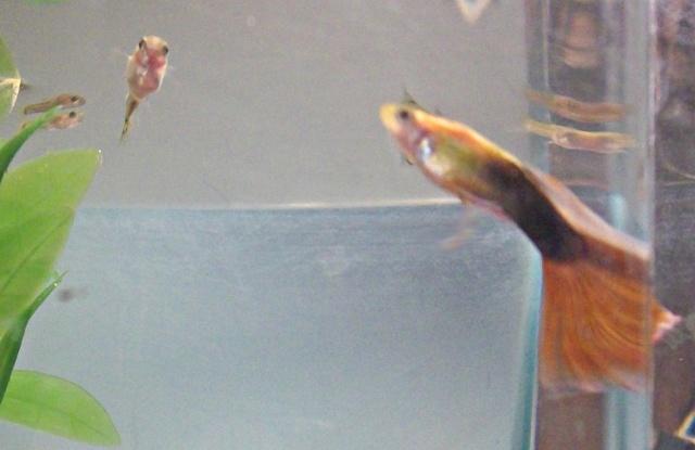 Mon aquarium =3 Photo517