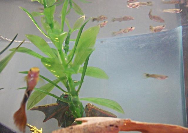 Mon aquarium =3 Photo519
