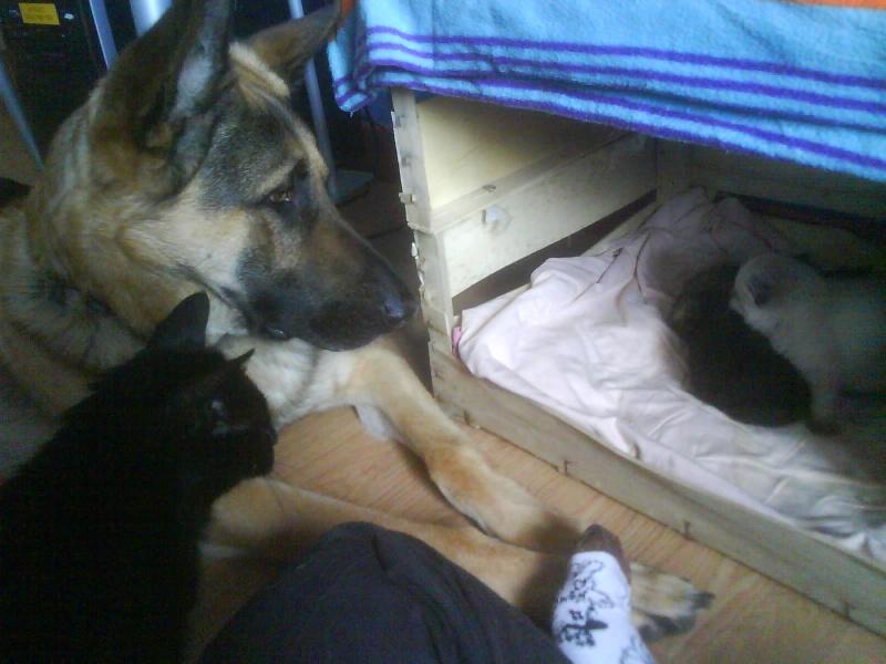 papa loup et son bébé chat Dsc01111