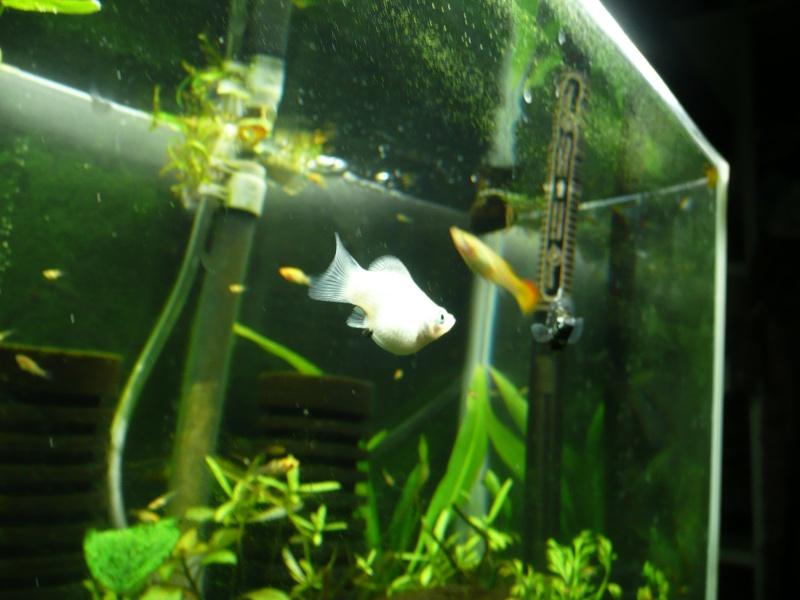 My fry tank P1010610