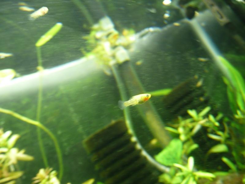 My fry tank P1010611