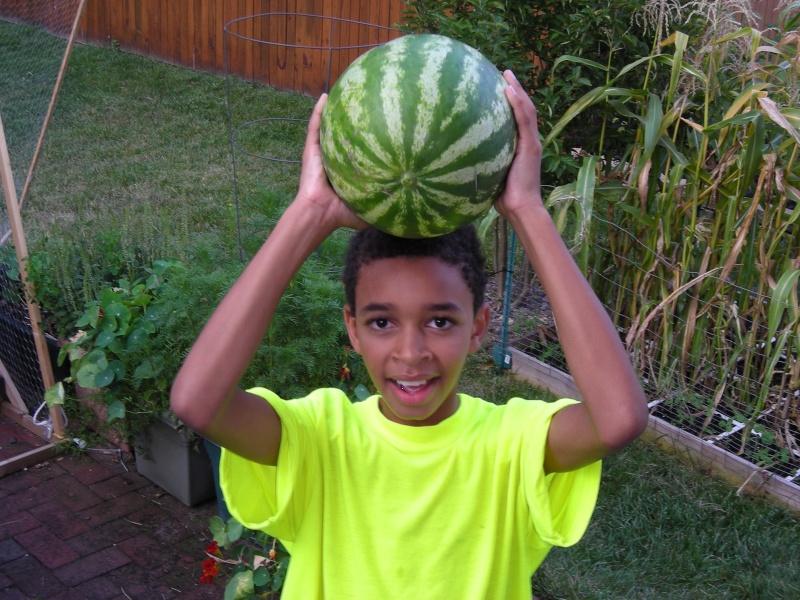 melons - Vertical melons 2008-410
