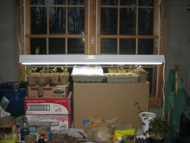 Grow Light Bulbs Img_2813