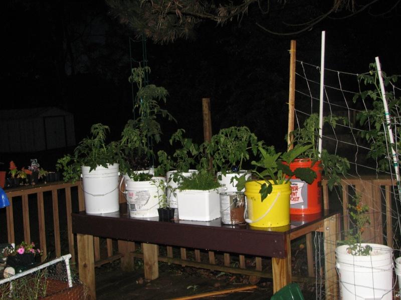 do tomatoes like string/netting? 28_mon10