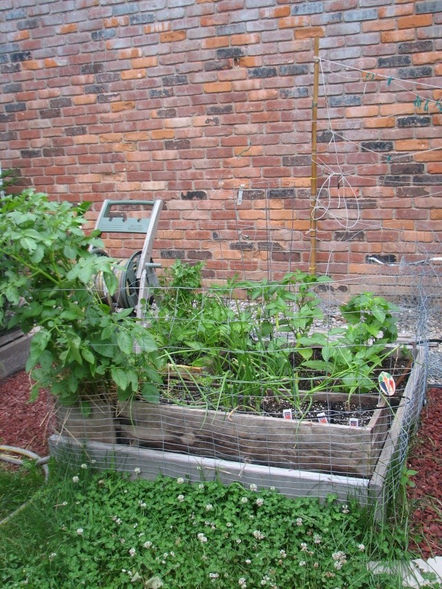 My so-called Urban Garden-picture over load Img_7917