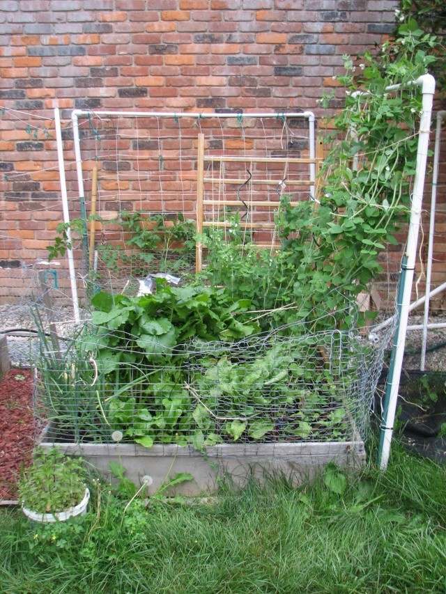 My so-called Urban Garden-picture over load Img_7921