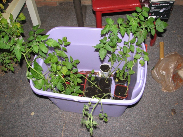 My so-called Urban Garden-picture over load Img_8010
