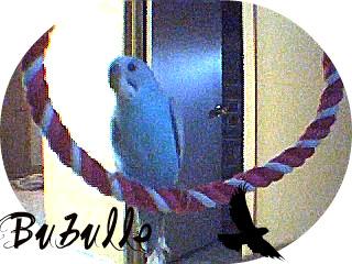 J'ai enfin La photo de Bubulle :) Bubull10
