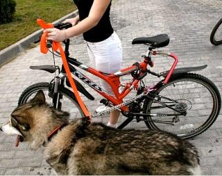 На велосипеде с собакой 156dd410