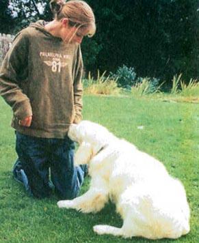 """""""Дрессировка собак с помощью кликера"""" Clip_i11"""