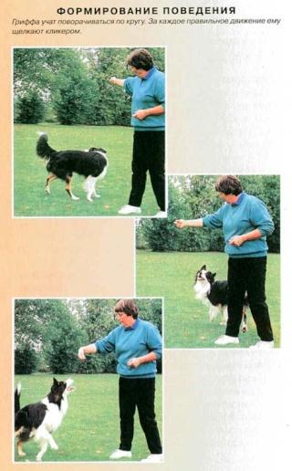 """""""Дрессировка собак с помощью кликера"""" Clip_i13"""