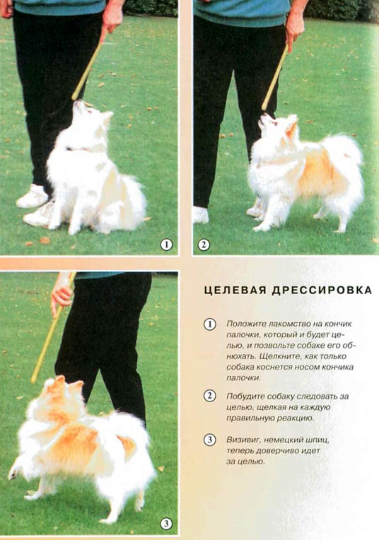 """""""Дрессировка собак с помощью кликера"""" Clip_i24"""