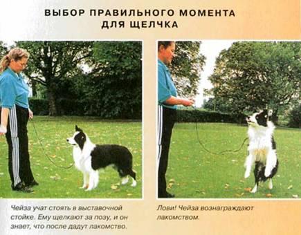 """""""Дрессировка собак с помощью кликера"""" Clip_i30"""