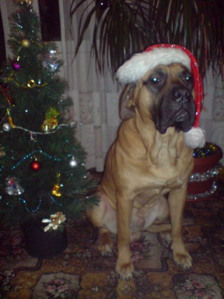 """""""Новогодняя собака"""" Dsc00612"""