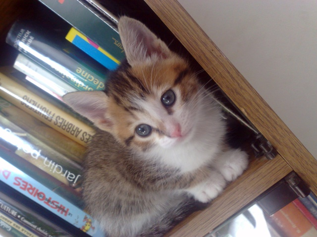 Spécials Photos : Avant/Après de nos chats 04042018