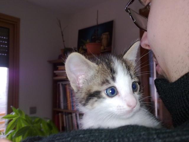 Spécials Photos : Avant/Après de nos chats 04042019