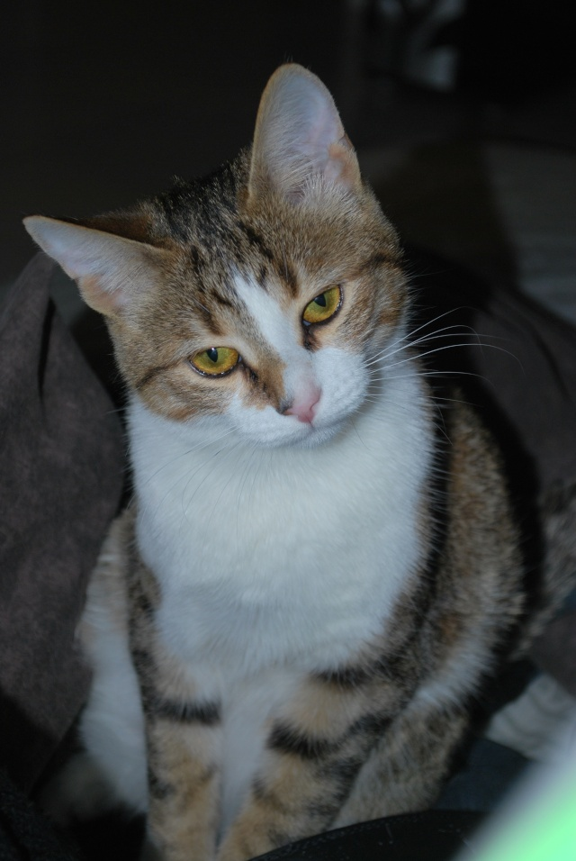 Souki - Page 5 Photo168