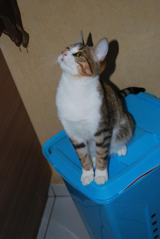 Souki - Page 5 Photo169