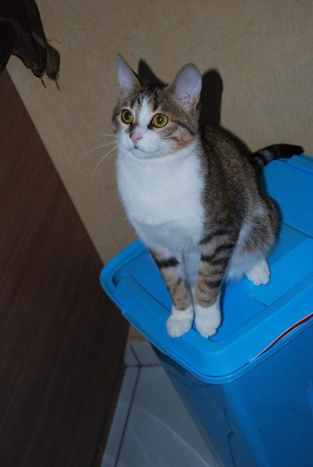 Souki - Page 5 Photo170