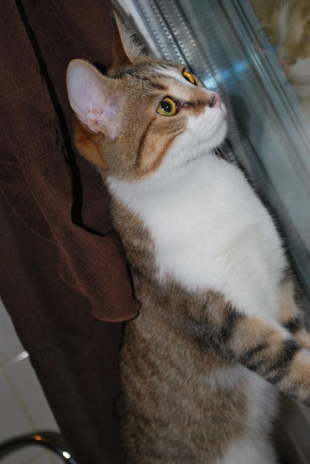 Souki - Page 5 Photo182