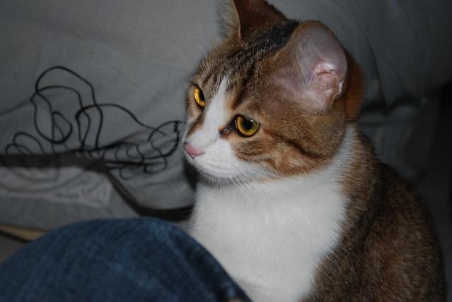 Souki - Page 5 Photo183