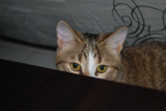 Souki - Page 5 Photo185