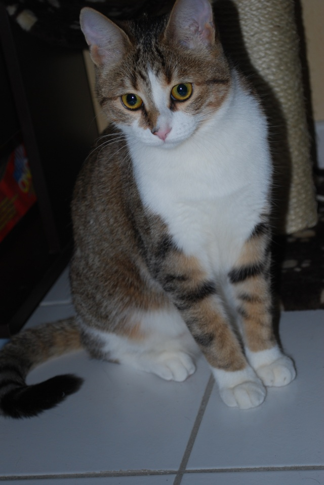 Souki - Page 6 Photo195