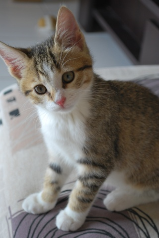 Spécials Photos : Avant/Après de nos chats Photo_84