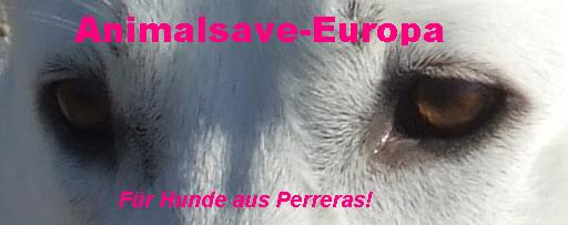 Animalsave-Europa