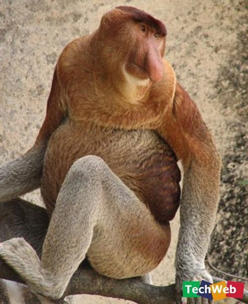 Binatang-binatang pelik di luar negara Kerabe10