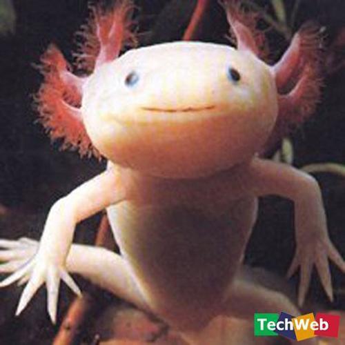 Binatang-binatang pelik di luar negara Salama10