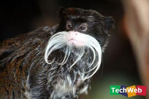 Binatang-binatang pelik di luar negara Tamari10