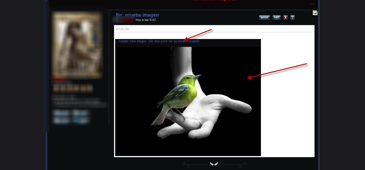 Por qué no redimensiona bien las imágenes? 40010