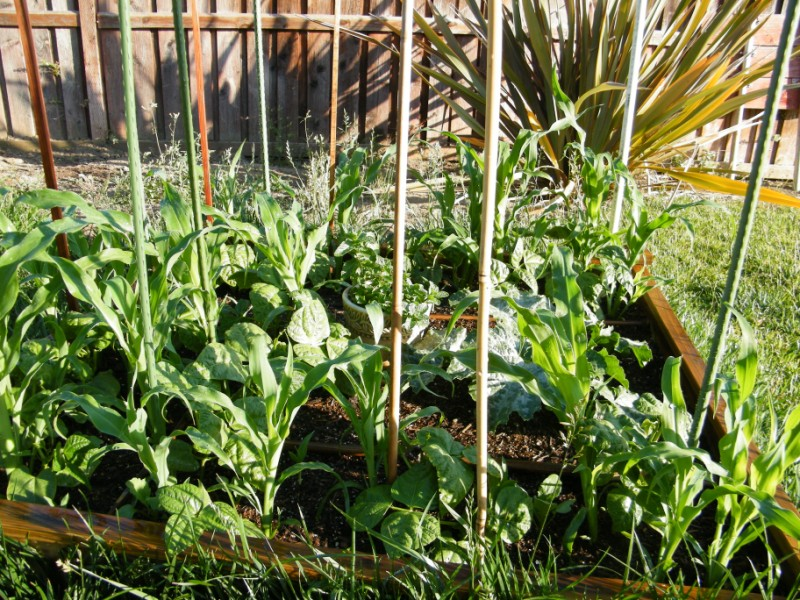 My Garden Is Beginning to Scare Me 6_jun_14