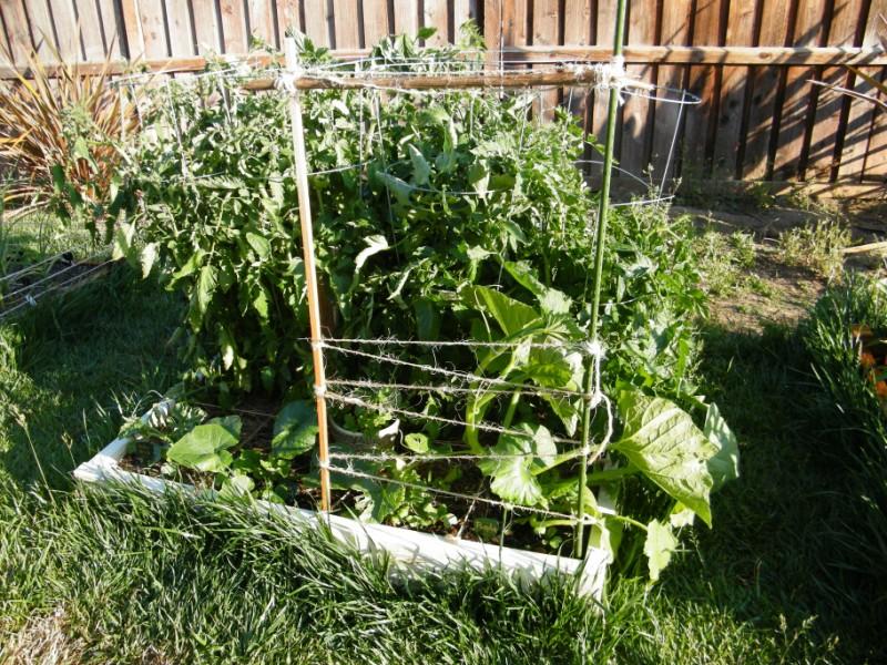 My Garden Is Beginning to Scare Me 6_jun_15
