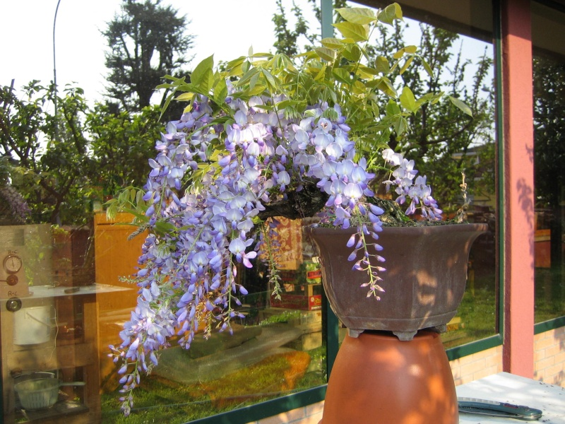 Una bella fioritura Img_4013