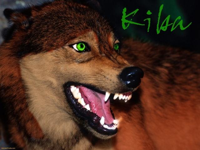 Kiba's Photos Kiba_a12